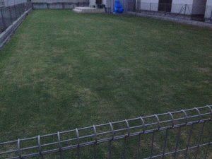 作業後の裏庭の芝生。南東から。