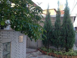 玄関前のコニファーとシマトネリコ。正面側から。