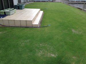 2016年6月7日の裏庭の芝生。西側から撮影。