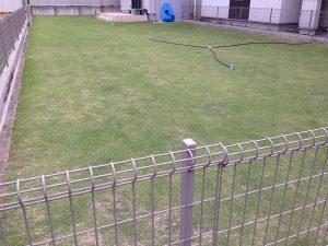 2016年6月7日の裏庭の芝生。南東から撮影。