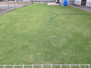 2016年6月7日の裏庭の芝生。東側から撮影。
