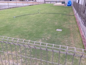 2016年6月7日の裏庭の芝生。北東から撮影。