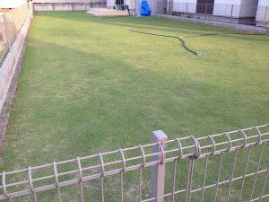 2016年6月8日の芝生。南東から。