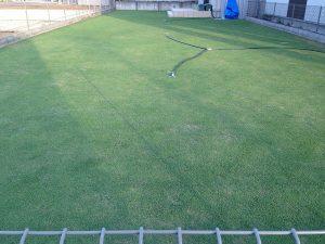2016年6月8日の芝生。東側から。