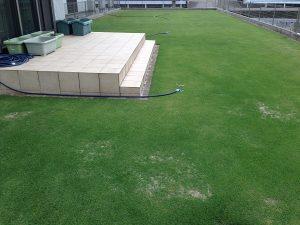 2016年6月9日の芝生。西側から。