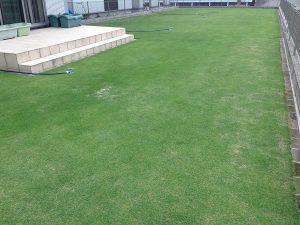 2016年6月9日の芝生。南西から。
