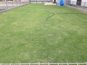 2016年6月9日の芝生。東側から。