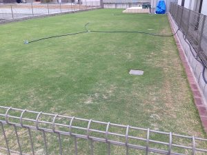 2016年6月9日の芝生。北東から。