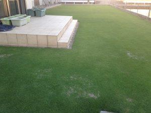 2016年6月10日の芝生。西側から。