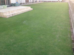 2016年6月10日の芝生。南西から。