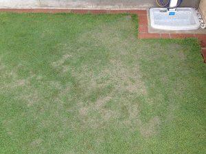 立水栓の近くの芝生に部分目砂。