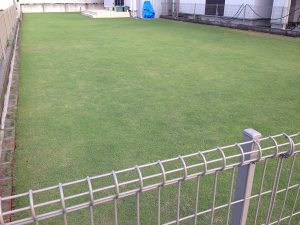 2016年6月15日の裏庭の芝生。