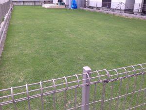 2016年6月16日の裏庭の芝生。南東から。