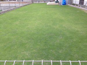 2016年6月16日の裏庭の芝生。東側から。