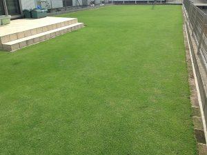 2016年6月16日の裏庭の芝生。南西から。