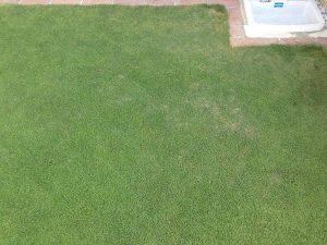 不定形の茶色い芝生の病気。