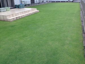 2016年6月19日の午後の裏庭の芝生。南西から。