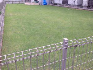 2016年6月19日の午後の裏庭の芝生。南東から。