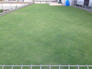 2016年6月20日の裏庭の芝生。東側から。