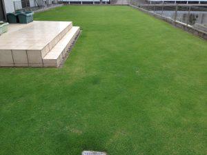 2016年6月21日の裏庭の芝生。西側から。