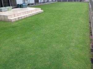 2016年6月21日の裏庭の芝生。南西から。