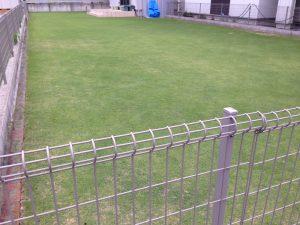 2016年6月21日の裏庭の芝生。南東から。