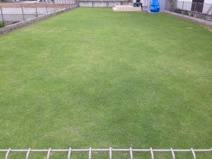 2016年6月21日の裏庭の芝生。東側から。