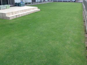 2016年6月22日の芝生。南西から。