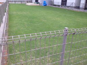 2016年6月22日の芝生。南東から。