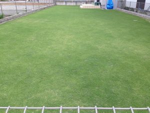 2016年6月22日の芝生。東側から。