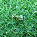 芝生の上のカエルとTM9の花?
