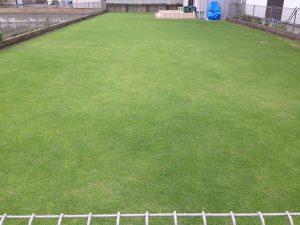 2016年6月23日の芝生。東側から。