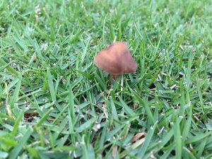 芝生の上の色々な種類のキノコ。