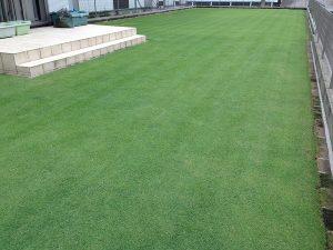 芝刈り後の芝生。南西から。