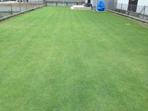 芝刈り後の芝生。東側から。