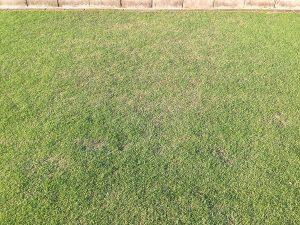 芝生の一部で生育の悪い箇所。