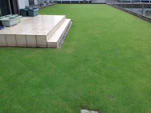 2016年7月3日の朝の雨上がりの芝生。西側から。