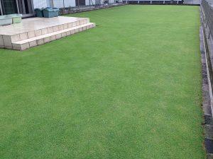 2016年7月3日の朝の雨上がりの芝生。南西から。