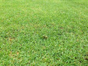 芝生の上の小さな緑のアマガエル。