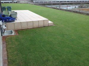 サッチング後の芝生。南西から。