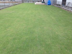 サッチング後の芝生。東側から。