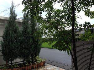 玄関前のコニファーとシマトネリコ。後ろ側から。