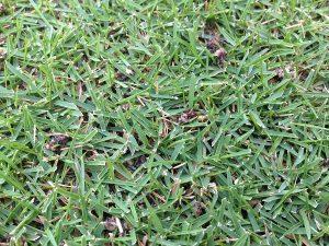 芝生の上のイデコンポ。昨日よりは解けたがまだ残っている。