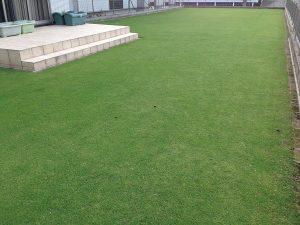 2016年7月8日の芝生。南西から。