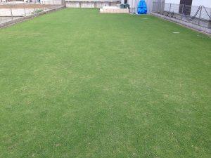 2016年7月8日の芝生。東側から。