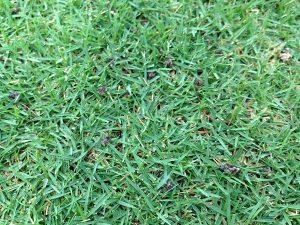 芝生の上のイデコンポガーデンEVの粒。