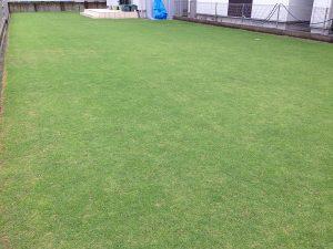 2016年7月9日の朝の小雨の裏庭の芝生。南東から。