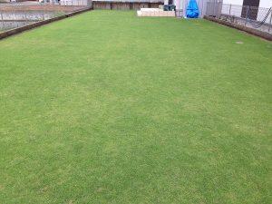 2016年7月9日の朝の小雨の裏庭の芝生。東側から。