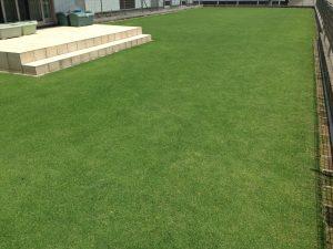 2016年7月10日の裏庭の芝生。南西から。12:00。