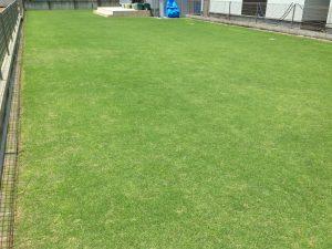 2016年7月10日の裏庭の芝生。南東から。12:00。
